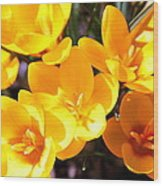 Crocuses In Yellow Wood Print