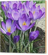 Crocuses Wood Print