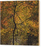 Crooked Tree At Beaver's Bend Wood Print