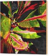 Croton Abstract I Wood Print