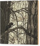 Crow In Thought Wood Print