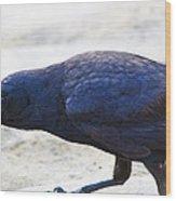 Crow Snacking Wood Print