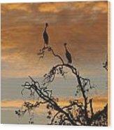 Crowned Cranes At Sunrise Wood Print