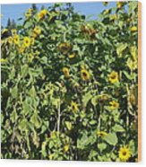 Crows In The Sunflowers Wood Print