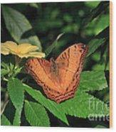 Cruiser Butterfly Wood Print