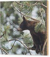 Cub In Tree Wood Print