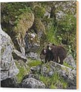 Cubs On A Rock Wood Print