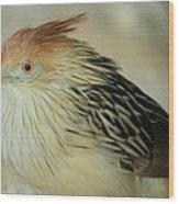 Cuckoo Bird Wood Print