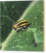 Cucumber Beetle Wood Print