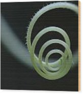 Cucumber Tendril Spiral Wood Print