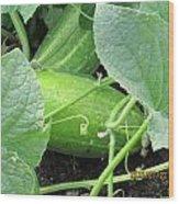 Cucumbers Wood Print