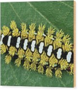 Cup Moth Limacodidae Caterpillar On Leaf Wood Print