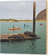 Curious About Sea Lions Wood Print