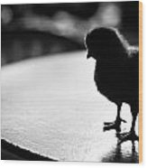 Curious Chick Wood Print