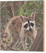 Curious Critter Wood Print