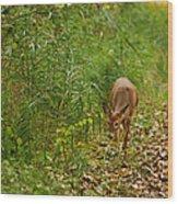 Curious Doe 9838 Wood Print