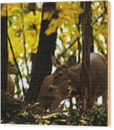 Curious Doe Wood Print by Scott Hovind