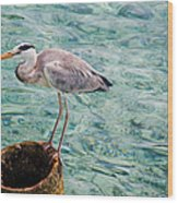 Curious Heron. Maldives Wood Print