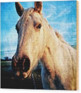 Curious Horse Wood Print