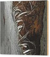 Curly Bark Of A Palm Tree Wood Print