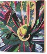 Curly Croton Wood Print
