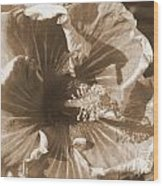 Curly Hibiscus In Sepia Wood Print
