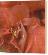 Curly Hibiscus Wood Print