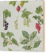 Currants And Berries Wood Print by Elizabeth Rice