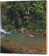 Curtis Falls - Mt Tamborine Wood Print