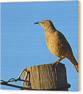 Curved Billed Thrasher Sitting On A Post Wood Print