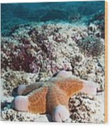 Cushion Star Starfish Wood Print by Georgette Douwma