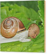 Cute Baby Boy With A Snail Shell Wood Print by Jaroslaw Grudzinski
