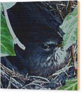 Cute Black Bird Mum Watching Over Her Eggs In Her Nest Wood Print
