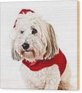 Cute Dog In Santa Outfit Wood Print by Elena Elisseeva