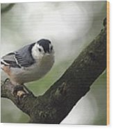 Cute Face Nuthatch Wood Print