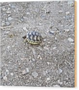 Cute Mini Turtle One Step At A Time  Wood Print
