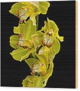 Cymbidium - Boat Orchid Wood Print