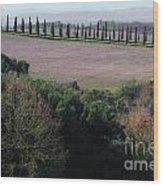 Cypress Allee Wood Print