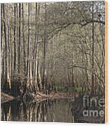 Cypress And Water Wood Print