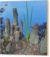 Cypress Knobs Wood Print
