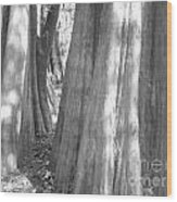 Cypress Path Wood Print