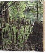 Cypress Stumps Wood Print