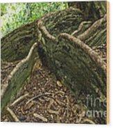 Cypress Tree On Hawaii Wood Print by Micah May