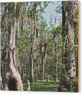 Cypress Trees And Water Hyacinth In Lake Martin Wood Print