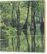 Cypress Trees Cross A Waterway Wood Print