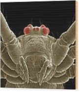 Daddy Long Legs Spider, Sem Wood Print