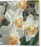 Daffodil Flowers Art Prints Spring Floral Wood Print