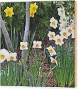 Daffodil Garden Wood Print