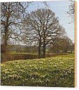 Daffodil Glade Wood Print