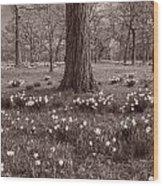 Daffodil Glade Number 2 Bw Wood Print
